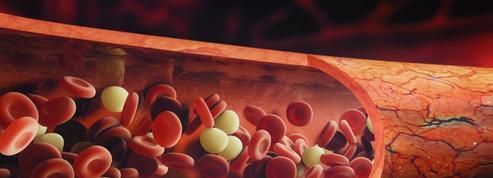 Maladies vasculaires : vers des vaisseaux recréés de novo