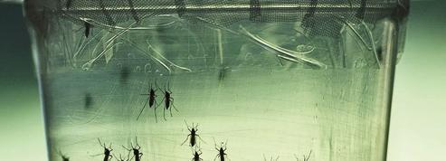 La transmission sexuelle du virus Zika n'influera pas sur l'épidémie