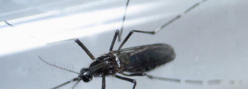 Les connaissances sur Zika progressent