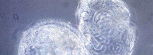 Des manipulations génétiques sur des embryons humains autorisées en Grande-Bretagne