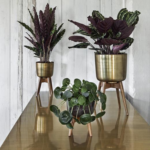 Cache pot design