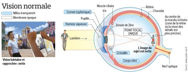 Ce schéma représente l'oeil dans une vision normale