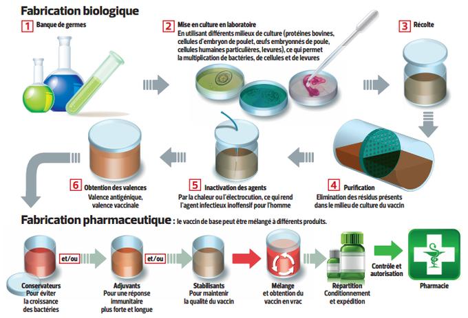ce schéma détaille les étapes de fabrication des vaccins
