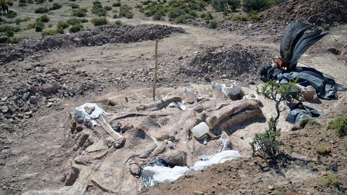 Vue d'ensemble du site des fouilles où ont été découverts les ossements de sauropodes géants en Argentine.