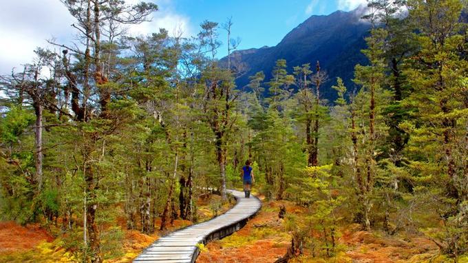 Dans la vallée de Clinton, un tapis roux et or se déploie au pied des arbres. Ces tourbières abritent la drosera, une plante carnivore.