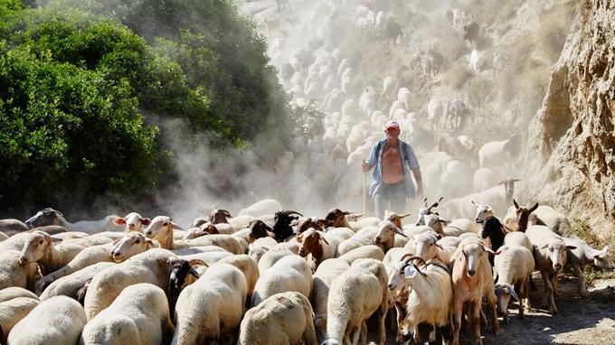 Le coeur de la Basilicate déroule des paysages dénudés où, parfois, un berger surgit de la poussière.