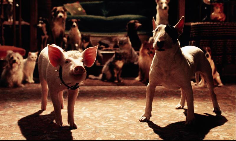 Programme tv babe le cochon dans la ville - Papa cochon a la piscine ...