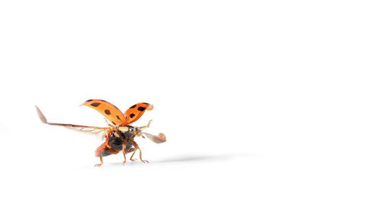 insectes la libellule de nos campagne