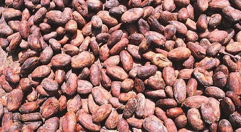 Le cours du cacao atteint des records