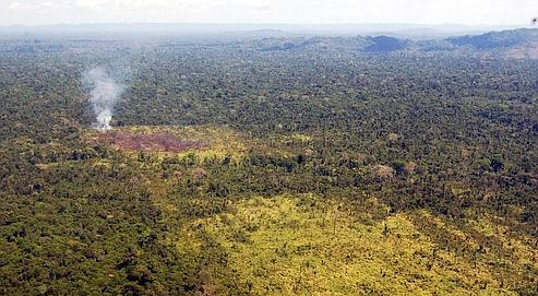 4milliards de dollars contre la déforestation