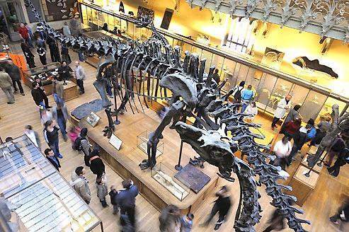 Les derniers secrets des dinosaures