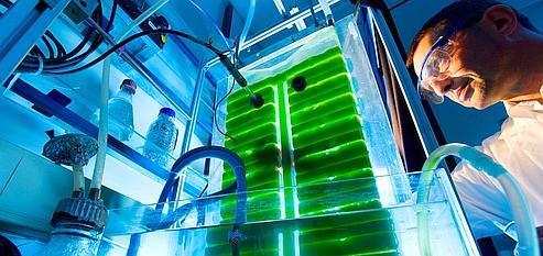 Les algues vont-elles investir nos réservoirs?