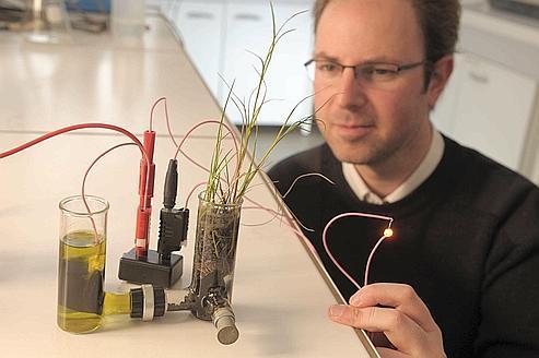 Des piles électriques nourries aux bactéries