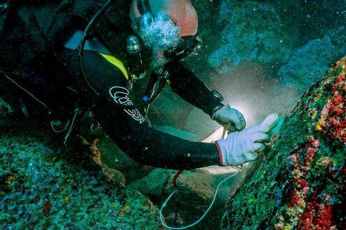 Les îles Marquises, écosystème marin unique au monde