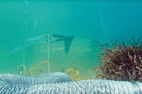 L'acidification des océans altère la faune et la flore
