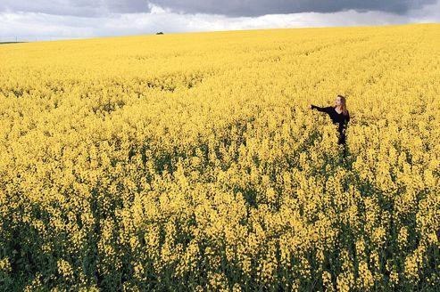 Un avion canadien vole à la moutarde