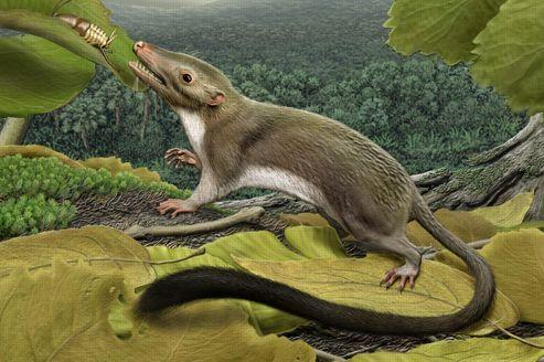 L'ancêtre commun des mammifères dévoilé