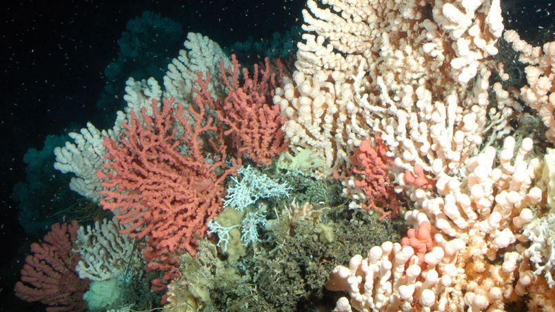 Les émissions de CO2 changent la composition des océans