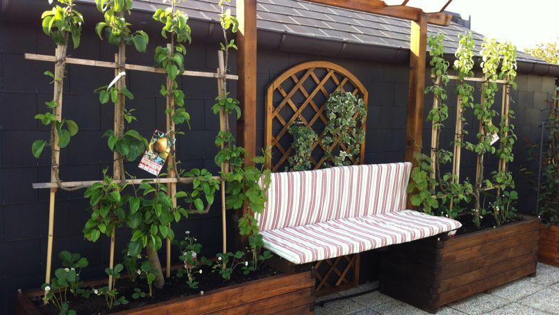 Au jardin ce week end faites pousser des pommiers sur for Jardin sur un balcon