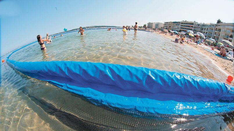 Les méduses semblent vouloir s'installer définitivement en Méditerranée