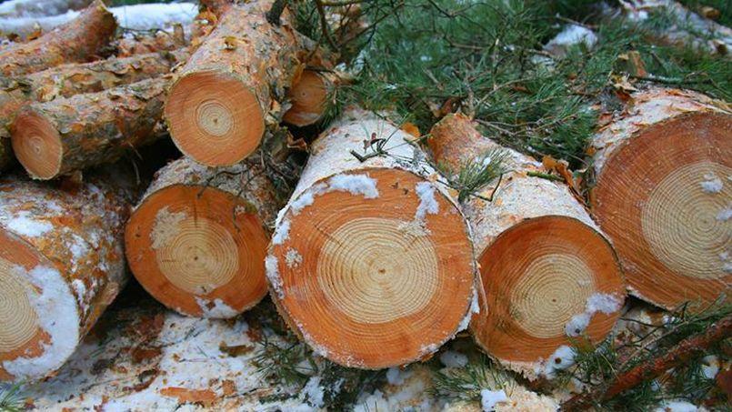 Ces arbres gelés indiquent un changement de couleur qui marque la catastrophe de Tchernobyl. Tous les arbres, jeunes et vieux, montrent la marque à peu près au même moment.