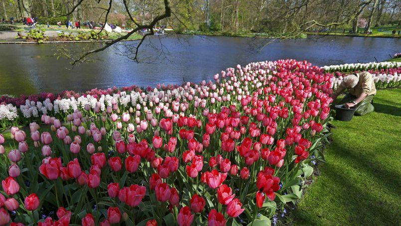 Aux pays bas les jardins de l 39 europe sont en fleurs for Jardin de jardiniers