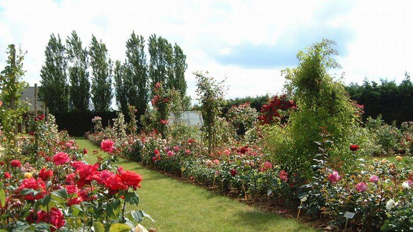 En piste pour le tour de france des roseraies - Jardin de la rose doue la fontaine ...
