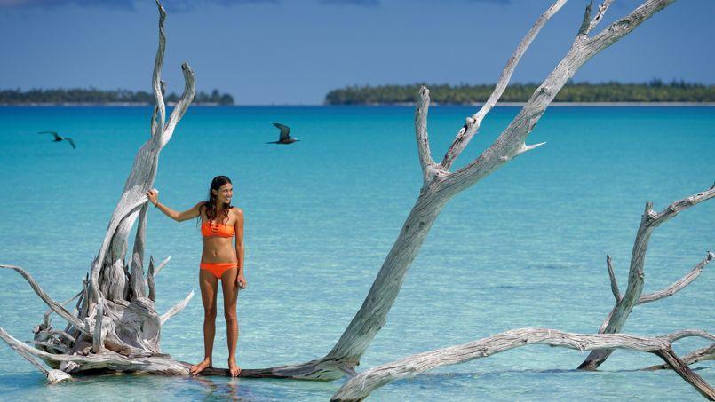 Tumi Brando, gardienne de trésor: 14 espèces d'oiseaux, 167 familles de poissons, 38 végétaux indigènes.