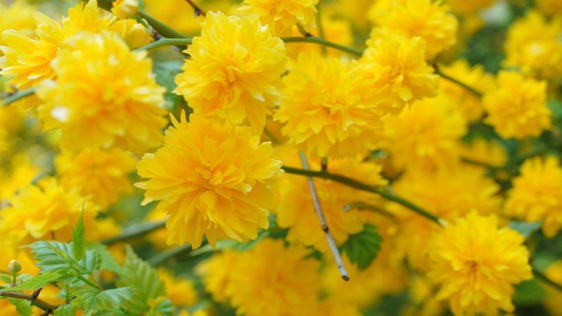 Sur la riviera italienne le charme anglais de la villa - Nom de fleur en anglais ...