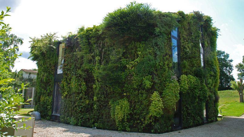 Les parisiens veulent plus de murs et de fa ades v g talis s for Architecture vegetale