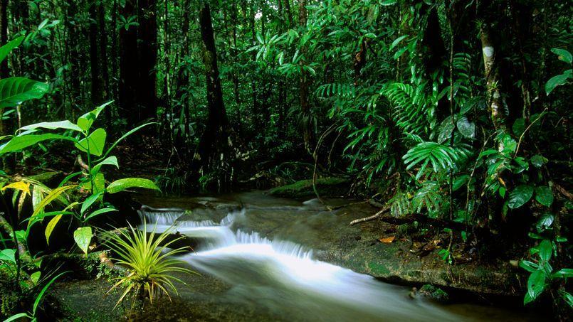 La forêt luxuriante de la montagne de Kaw semble impénétrable. Cette ambiance de pénombre ajoute une étrange impression de mystère.