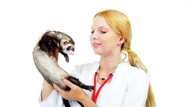 Programme tv in situ les animaux une fascination qui for Entreprise qui rapporte