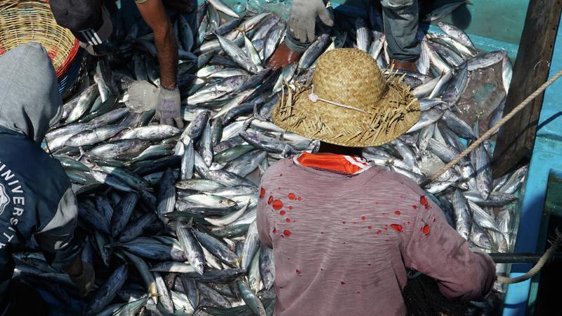 Sale temps pour la planète ! - Indonésie, paradis en danger
