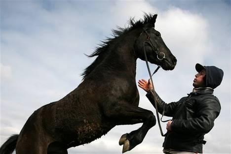 Léa Lansade lit l'avenir des jeunes chevaux