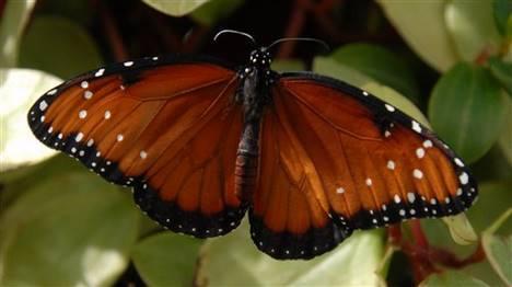 Un an à regarder voler les papillons des jardins français