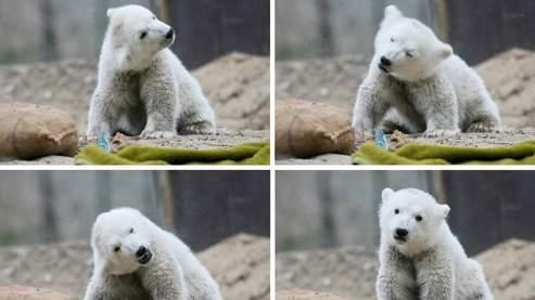 Le célèbre ours Knut (AFP/Sax)