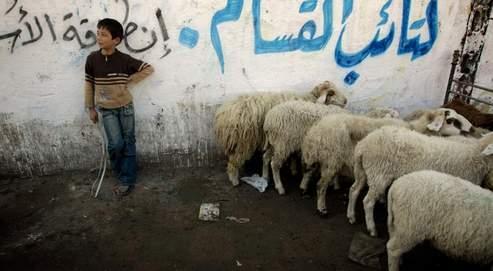 Un garçonnet palestinien surveille ses moutons, dans une rue de Gaza (AP).