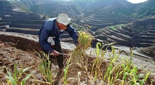 Les Chinois qui vivent de la terre, comme ici, dans une vallée du Shaanxi, ne peuvent ni la vendre ni la transmettre. Les hiérarques du Parti sont devenus «les nouveaux seigneurs». Ils ont toute autorité pour louer, ou céder, une parcelle contre un dessous-de-table.