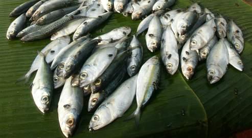 Un poisson ou des bouts de poisson peuvent acquérir assez vite un épouvantable parfum reconnaissable entre mille.