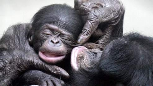 La moitié des espècesde primates en grave péril