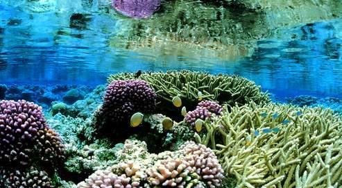 Les trois nouvelles aires protégées abritent une très grande diversité d'espèces et des milieux naturels exceptionnels.