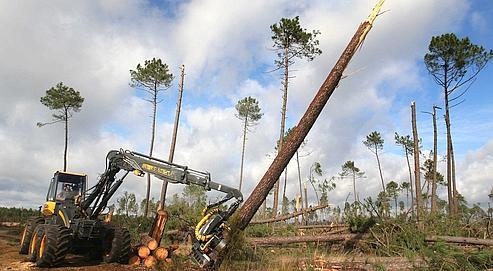 Travaux de dégagement après la tempête, mercredi dernier. La forêt landaise, entièrement vouée à la production de bois, emploie 35000 personnes, soit autant qu'Airbus.