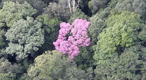 Le rôle de régulateurde carbone des forêts menacé