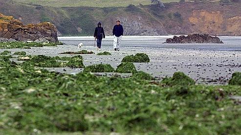 Algues vertes : les agriculteurs pointés du doigt