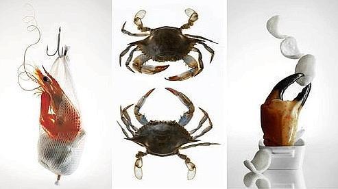 Trois clichés issus du Festival de la Photographie Culinaire 2009 (Claudia Uribe, Amélie Ambroise).