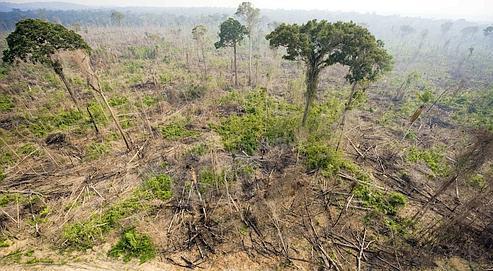 Vue aérienne de la forêt, au nord du Brésil. La situation reste préoccupante dans ce pays, même si elle s'est améliorée.
