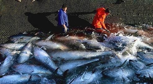 Paris veut interdire la pêche au thon