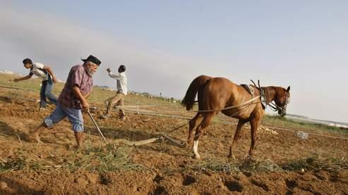 Un fermier palestinien laboure son champ à Beit Lahia, au nord de la bande de Gaza.