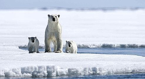 Un rapport récent de l'Institut norvégien de recherche sur la nature (Nina) conclut que les écosystèmes arctiques sont plus vulnérables à une marée noire que ceux de la mer du Nord, exploitée depuis trente ans.