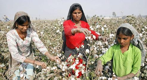 Des femmes travaillent dans un champ de coton près de la ville de Multan, en Pakistan.